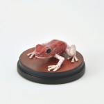 Roter Teppichfrosch